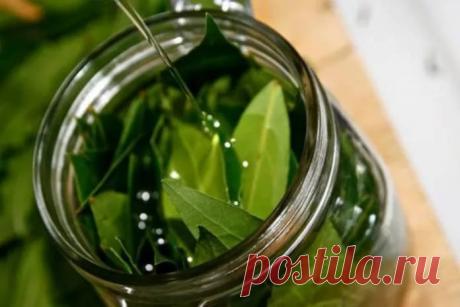 Один лист вылечит от бессонницы, высокого давления, снизит уровень сахара и жиров в крови. Смотрите