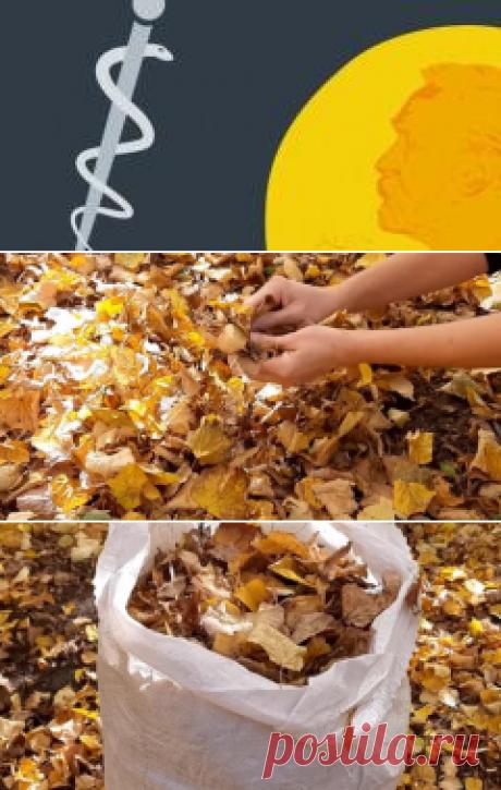 Золотое удобрение находится прямо у нас под ногами: нужно ли убирать опавшие листья в саду