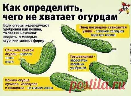 Violation of food of a cucumber is reflected in a fruit form.