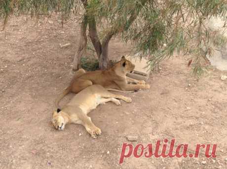Зоопарк Фригия в Тунисе