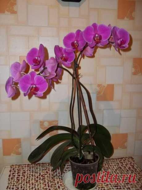 Как заставить орхидею цвести. Простые способы | Секреты сада. Дача, цветы | Яндекс Дзен