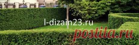 Живые изгороди – нескучный вариант декорирования участка | SMS LANDSCAPE DESING