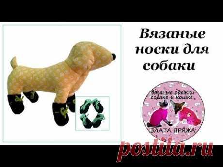 20. Вязанные носки для собаки