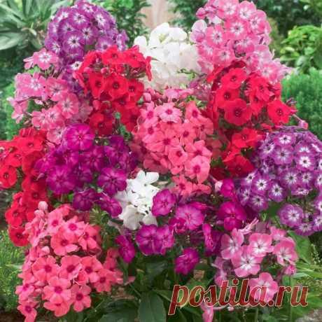 Какие цветы лучше сажать осенью | Наталья Кудрявцева | Яндекс Дзен