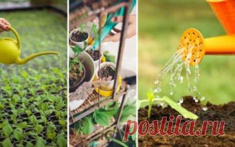 8 кустарников, которые преобразят ваш сад за самое короткое время | В цветнике (Огород.ru)