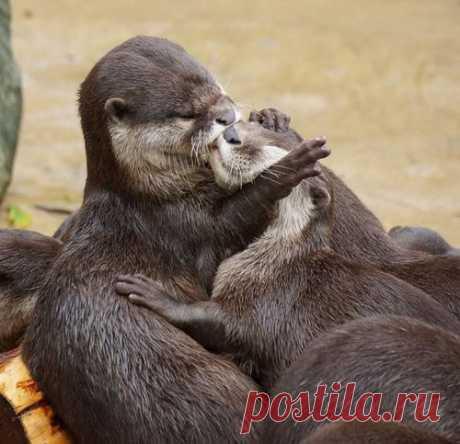 Поцелуи у животных. Фотоподборка.