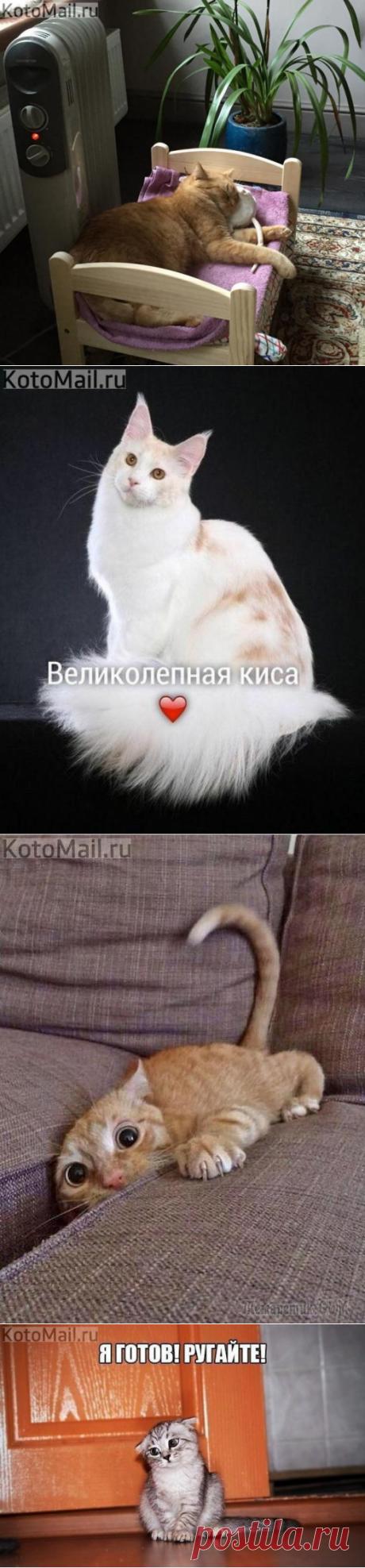 Осенний кот | KotoMail.ru