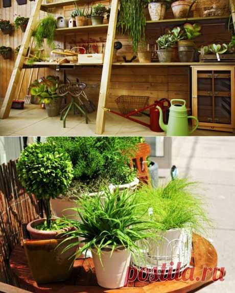 Натуральные удобрения для домашних растений