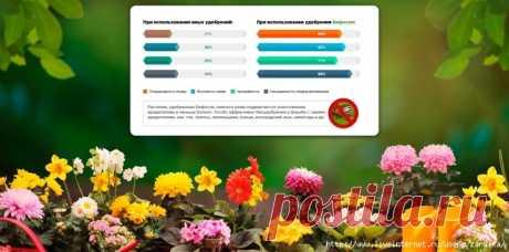 Бифогум - Натуральный концентрат для усиления роста садовых культур. - 21 Июля 2019 - Персональный сайт
