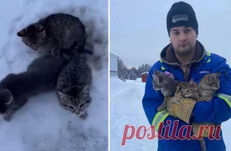 Мужчина полил котят кофе, чтобы их хвосты отмерзли от дороги