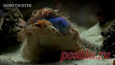 Видео: 5 реальных морских созданий, пойманных на камеру