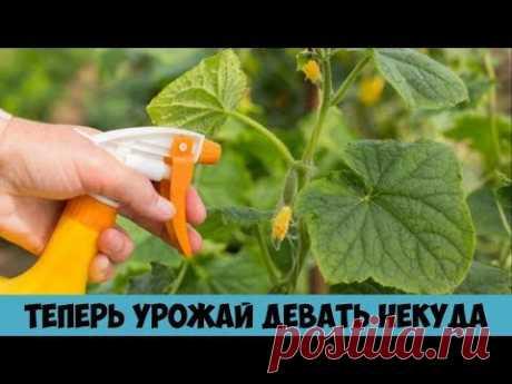 одноклассники сад и огород полезные советы