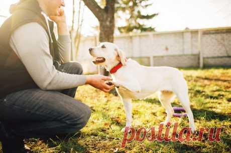 19 жестів, якими собаки спілкуються з людьми Собаки використовують жести, щоб спілкуватися з людьми.