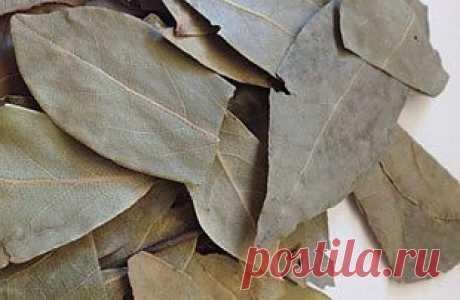 Лавровый лист: полезный свойства старой доброй лаврушки