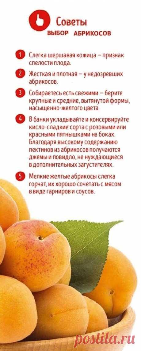 Советы по выбору абрикосов