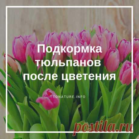 ПОДКОРМКА ТЮЛЬПАНОВ ПОСЛЕ ЦВЕТЕНИЯ  #toNatureInfo #КомнатныеРастения #Растения #Цветы #Тюльпаны #ВыращиваниеТюльпанов #УсловияДляТюльпанов #ТюльпаныУход #Сад #Садоводство #Цветоводство #Подкормка #Удобрение #Цветение