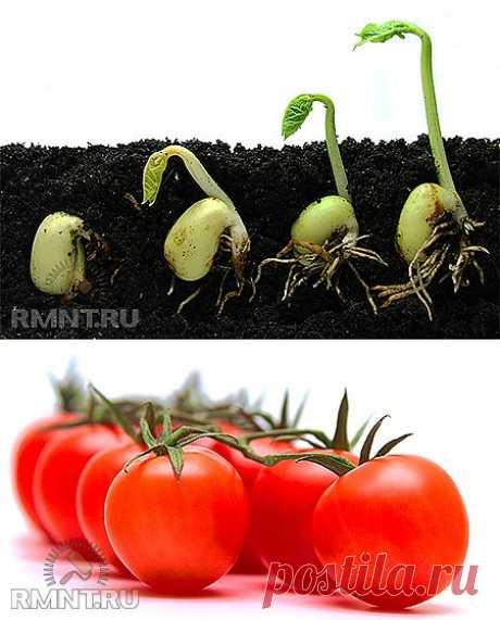 Подготовка семян к посеву RMNT.RU
