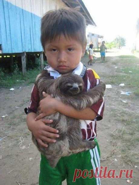 Ребенок и ленивец - Prikoly.us