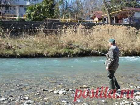 Форель на живца Продолжая тему рыбалки в стране вечного лета, которая находится на территории нашей необъятной страны, хочу рассказать о ловле форели на живца. Речь