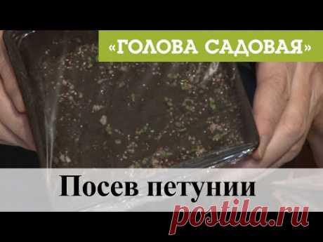 Голова садовая - Посев петунии