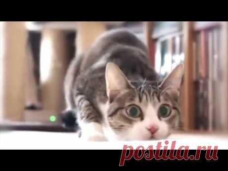 ПРИКОЛЫ №1 Смешные видео с котами. Подборка. ПРИКОЛЫ. Кот да Винчик  - 2016 - YouTube