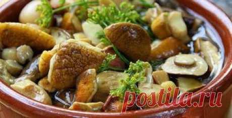 Рецепты блюд с грибами. Способы приготовления грибов.