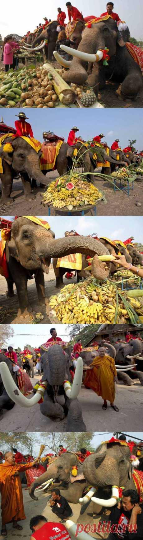 (+1) тема - Национальный день слонов в Тайланде | Непутевые заметки