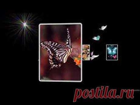 (+1) тема - Бабочки | ВИДЕОСМАК