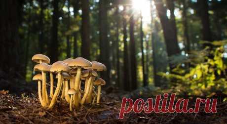 Грибы съедобные и их двойники. Какие грибы собираем в лукошко? | Огородники 🍄 Как не набрать ядовитых грибов. Самые лучшие и ценные грибы имеют своих двойников. Различить их можно по окрасу шляпки и выступающему соку при срезе. Не стоит собирать грибы возле дорог и в загрязненных районах.🍄