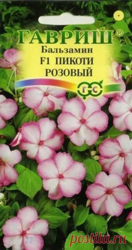 """Семена. Бальзамин Уоллера F1 """"Пикоти розовый"""" (5 штук) Всхожесть: 95%. Однолетнее неприхотливое растение. Куст шаровидной формы высотой 25-30 см и диаметром 20-30 см. Листья темно-зеленые. Растение усыпано крупными (5-6 см), белыми цветками с ярко-розовой каймой. Цветение обильное продолжительное в течении всего сезона. Хорошо растет в..."""