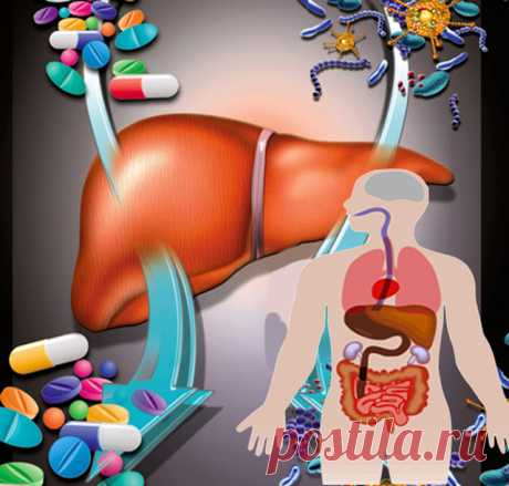 How to restore a liver and to get rid of excess weight in only 30 days