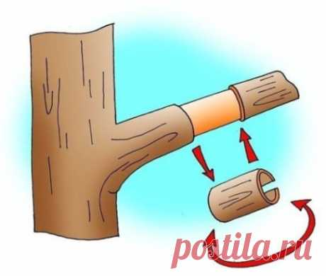 СПОСОБЫ ЗАСТАВИТЬ ПЛОДОНОСИТЬ ДЕРЕВЬЯ, ЕЩЕ БЫСТРЕЕ!!! Так бывает: посадишь деревце, ждешь плодов год, два, три… восемь (!), а урожая все нет. Впору бери топор и руби бесполезное создание природы. Но, подождите, не спешите. Да, это проблема, однако она легко решается! Существует несколько способов, которые заставят деревья плодоносить быстрее. Они разные, но принцип действия у них одинаковый – навредить дереву. Да-да, именно навредить. Дело в том, что главная задача любого растения – оставить
