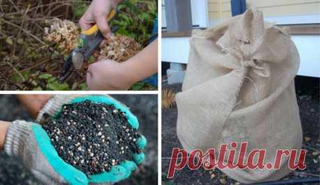Как сохранить гортензию зимой в саду, как защитить укоренённые черенки, нужно ли выкапывать цветок на зиму, уход в открытом грунте