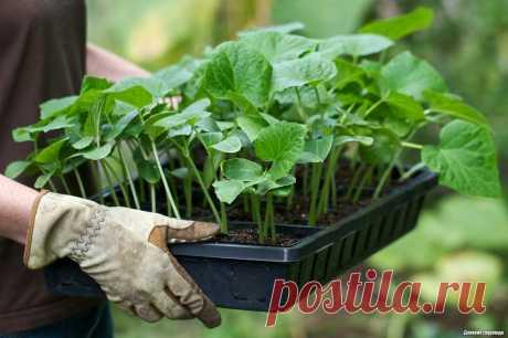 Быстрый способ вырастить рассаду | Дневник садовода | Яндекс Дзен
