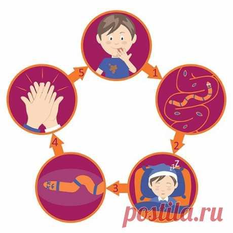 Как узнать, есть ли глисты у взрослого, ребёнка: признаки — СОВЕТНИК