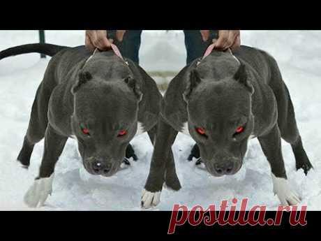Самые Лучшие и Верные Собаки Для Охраны, ДРУЖБА С ВОЛКОМ