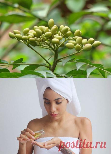 """Индийское масло """"Ним"""". 4 уникальных свойства растения"""