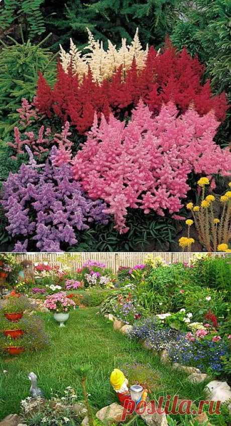 Красивые клумбы из многолетних цветов.  (нашел Фенхель)