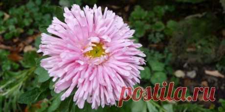 10 красивых цветов для клумбы, за которыми легко ухаживать - Лайфхакер