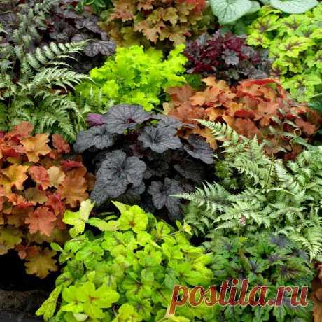 Цветастый коврик для дачного участка: 6 почвопокровных растений, цветущих всё лето Убираем проплешины на дачном участке: шесть почвопокровных цветущих растений, которые изменят облик вашего сада и удержат влагу в почве