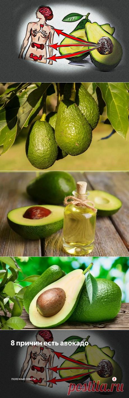 8 причин есть авокадо | Полезные советы | Яндекс Дзен