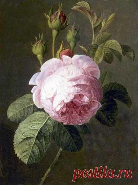ROSE, BY CHRISTIAEN VAN POL
