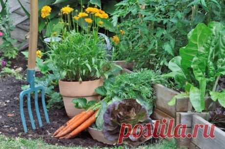Какие огородные культуры не боятся тени Каждому начинающему огороднику необходимо знать, какие растения могут расти в тени, а каким обязательно нужно располагаться на солнце.