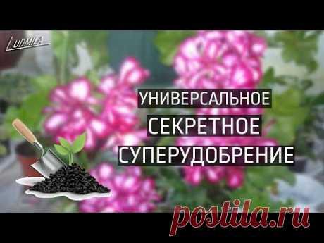 МОЁ СЕКРЕТНОЕ СУПЕРУДОБРЕНИЕ