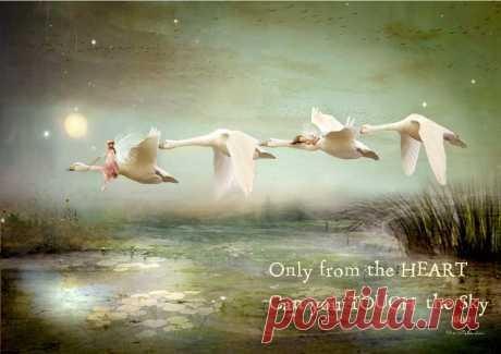 Charlotte Bird Fairy Photographer - Фото
