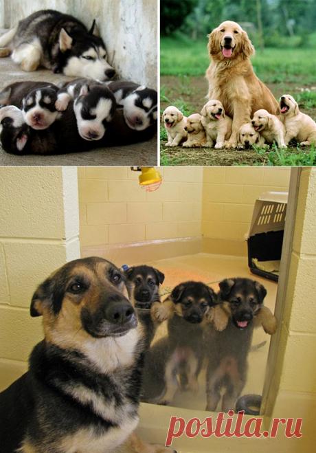 Эти 30 собак очень гордятся своим потомством!