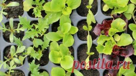 Какую рассаду нужно сеять в феврале 2019: советы опытных огородников