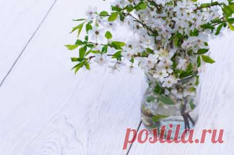 Мартовский букет. Веточки каких растений расцветут, если поставить их в воду