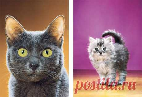 Есть такая профессия: фотограф кошек