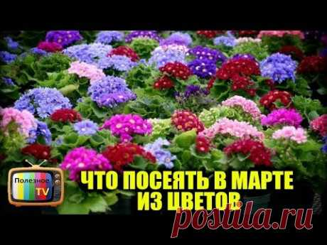 (1) WHAT TO SEED IN MARCH ON SEEDLING FROM FLOWERS - YouTube